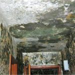 Mold Contamination