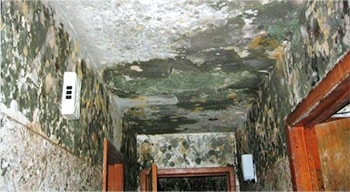Mold Contamination
