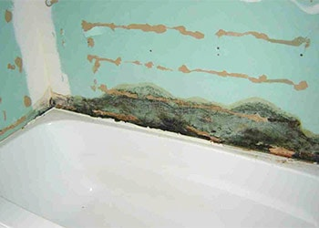 Remove Mold on Bathroom Walls