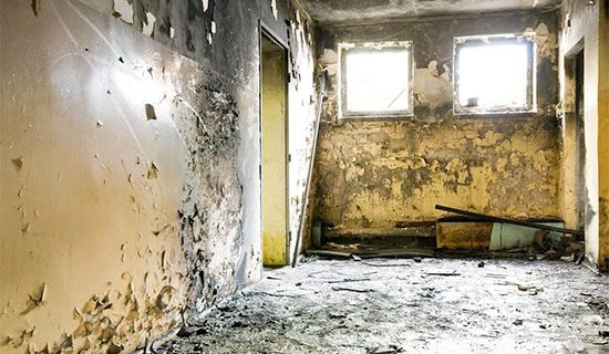 Black Mold Pictures in your home