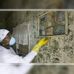 The Guide to Black Mold Smell