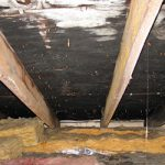 What You Should Do When You Get Black Mold in Attic