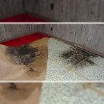How to Deal with Black Mold on Carpet