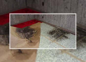Black Mold on Carpet