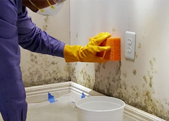 How To Clean Mold Off Walls In Bathroom Mold Cleans