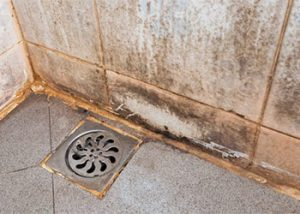 How To Get Rid Of Mold In The Shower