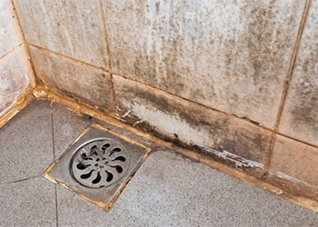 How to get rid of mold in the shower bathroom mold cleans - How to get rid of surface mold in bathroom ...
