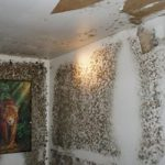 Identify the Mold from Water Damage from the Signs