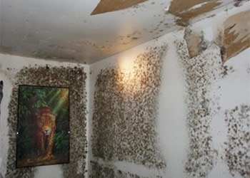 Identify the mold from water damage