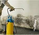 Mold Specialist : Helping You to Overcome Mold Problems