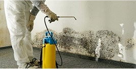 Mold Specialist Helping You to Overcome Mold Problems