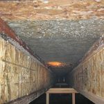 Mold The Mould: Nasty Mold in Crawl Space