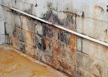 Remove Mold in Basement DIY Projects