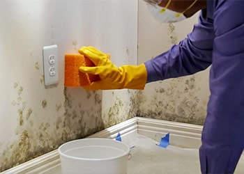 Take out Mold on Walls