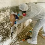 Does Insurance Cover Mold Remediation