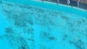 How To Kill Black Mold In Pool