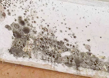 Cleaning the Black Mold in Bathroom and the Prevention