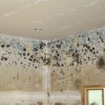 Some Tips and Information to Deal with Green Mold in Bathroom