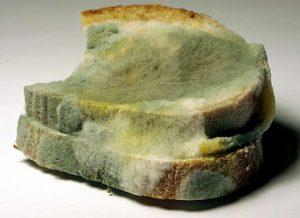 Green Mold on Bread