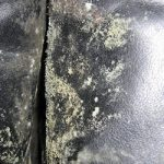 Some Tips to Deal with Green Mold Growing on Clothes