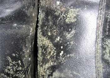 Green Mold on Clothes