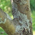 Understanding Green Mold on Trees and How to Treat It