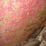 Understanding Red Mold: Overview of Red Mold and Its Danger