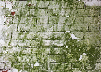 The Danger of Green Mold on Walls and