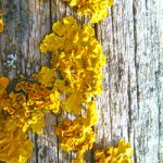 Yellow Mold Facts: Things about Yellow Mold that You Need to Understand