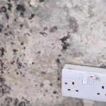 How to treat mold on walls and prevent it in the future