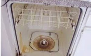 All About Pink Mold in Dishwasher