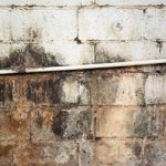 How to Kill Black Mold Safely & Forever