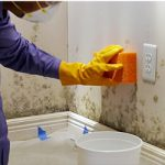 Remove Mold From Walls