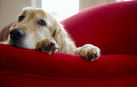 How Mold Can Harm Your Dog