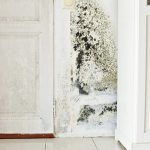 7 Ways to Keep Your Home Mold-Free
