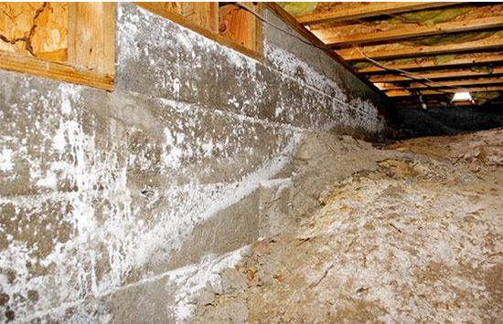 Prevent Mold in Beachfront