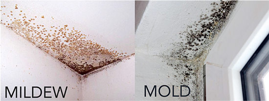 Mold VS Mildew
