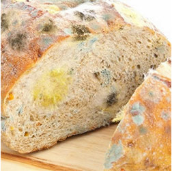 Yellow Mold On Bread dangerous