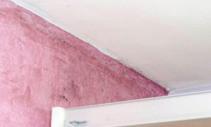 Pink Mold on the Wall